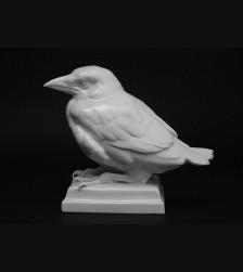 Young Raven- Schwarzburger ( Wilhelm Neuhaeuser ) # 3346
